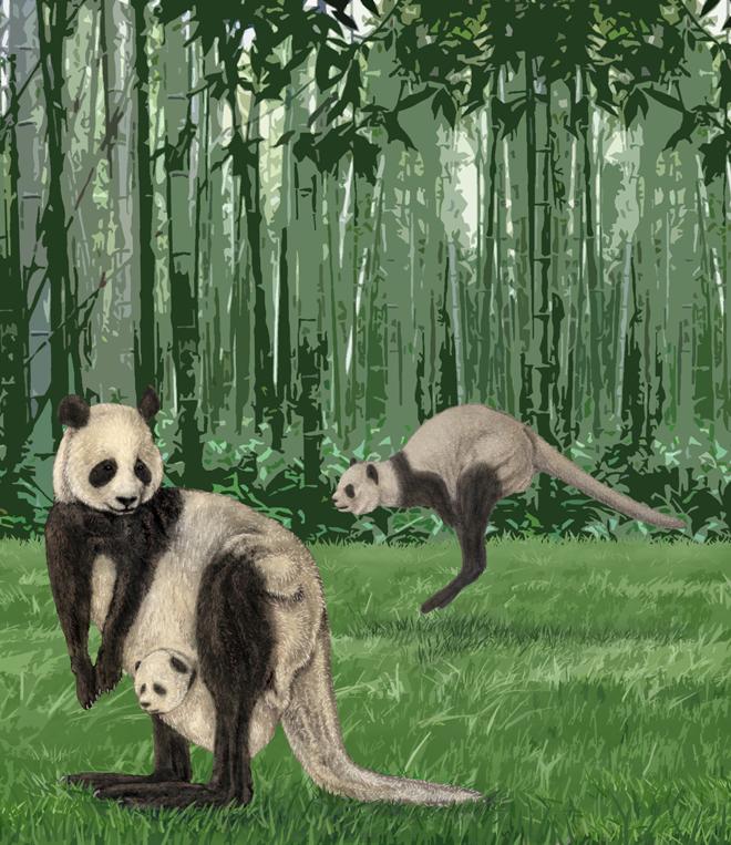 pandaroo